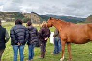 Image for event: Widening Perspectives Through Equine Supported Therapy