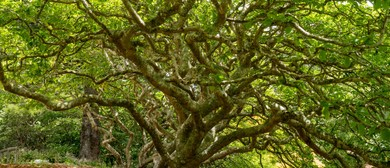 Guided Walk: Trees that Shaped History