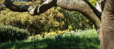 Guided Walk: Spring Festival Walk - The Joys of Spring