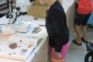 Image for event: Whangarei Rock & Gemstone Show