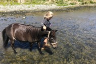 Image for event: School Holiday Horse Riding