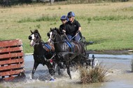 Image for event: Central Districts Carriage Driving Association