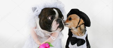 Paws In Parnell - A Great Day for A Dog Wedding