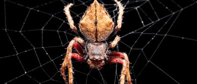 The Art of Invertebrate Macrophotography