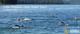 Rotary Rotorua Lake Okataina Open Water Swim