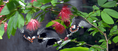 First Flight – Butterfly Release