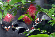 Image for event: First Flight – Butterfly Release
