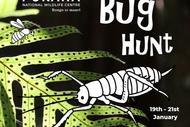 Image for event: Bug Hunt