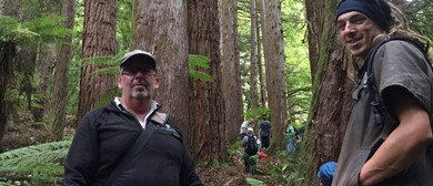 Redwood Ramble