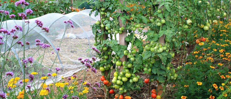 February In The Vegie Patch: Garden Tour