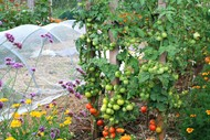 Image for event: February In The Vegie Patch: Garden Tour