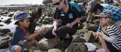 Seaweek - Rocky Shore Exploration Day