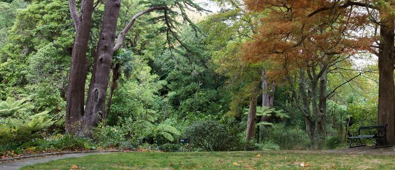 Guided Walk: Autumnal Botanical Exploration