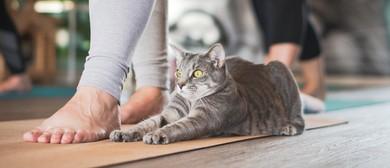 Catnap Yoga