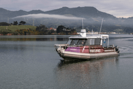 Image for event: Fish and Chips Harbour Cruise
