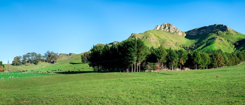 Te Mata Peak Off Road Half Marathon, 12k & 7k Trail Run