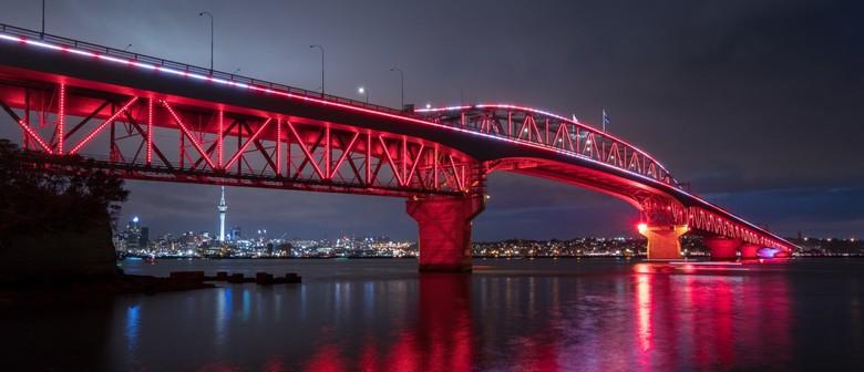 Vector Lights for Auckland Lantern Festival