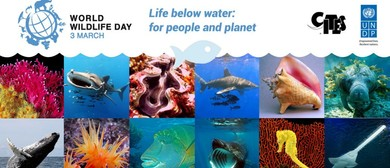Seaweek - UN World Wildlife Day 2019