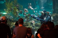 National Aquarium of New Zealand Celebrates Children's Day