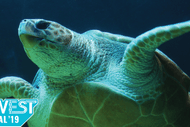 Image for event: EcoWest Festival 2019 - The Turtle and The Plastic Bag
