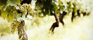 Wine Exploration: Classical Aromatic White Wines
