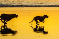 Image for event: Mutts In Muriwai