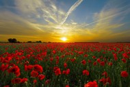 Image for event: ANZAC Service - Ward