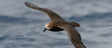 Seaweek - Karen Baird: Forest & Bird Seabird Advocate