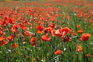 Image for event: ANZAC Day Service - Renwick