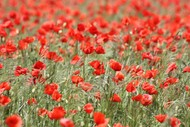 Image for event: ANZAC Day Service - Havelock