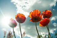 Image for event: ANZAC Day Dawn Service - Kaikoura