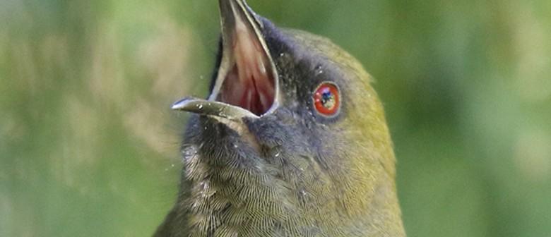 The Waitati Warblers