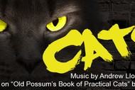 Image for event: Cats: SOLD OUT