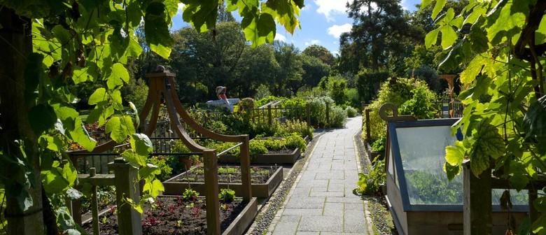 Curator's Edible Garden: All About Autumn
