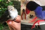 Bird Banding and Mist-Netting Workshops