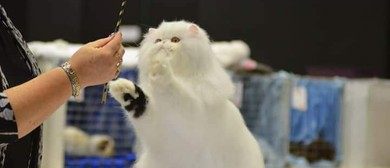 Longhaired Cat Breeders Club Show