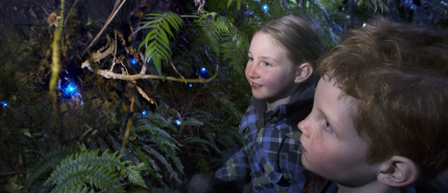 Glow in the dark titiwai tours - New Zealand glow worms