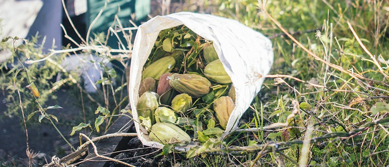 Pest Quest: Invasive Weeds Collection Day #2