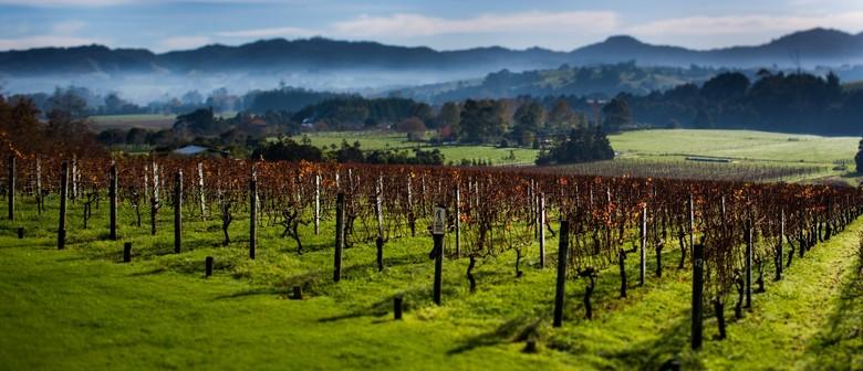 Auckland Wine Week - Matakana Magic