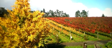 Auckland Wine Week - Wineries Out West