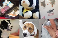Image for event: PET First Aid Course