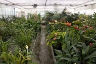 Image for event: Botanic Gardens Day Nursery Tour