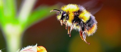 Bees: Their Amazing World and How We Can Save Them