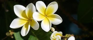 Pacific Island Genealogy