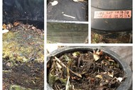 Home Composting for Beginners