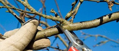 Pruning Workshop