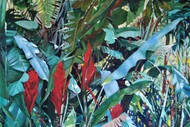Image for event: Herb Foley - Among Trees