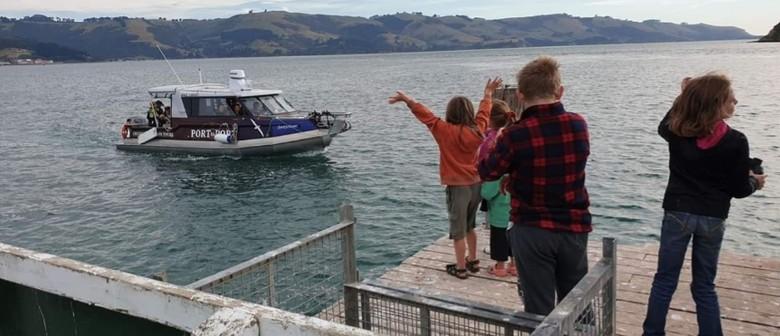 Mini Harbour Tour