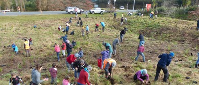 Greening Taupo and Contact Energy Community Planting Day