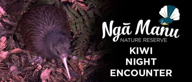 Kiwi Night Encounter